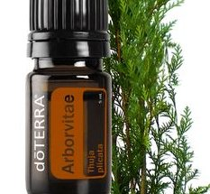 Arborvitae Essential Oil, 5mL