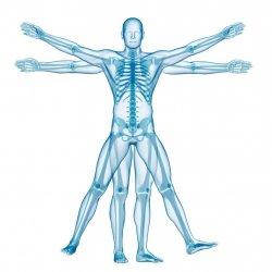 Posture Analysis Session