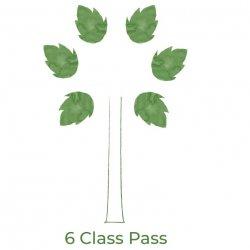 Six (6) Class Pass