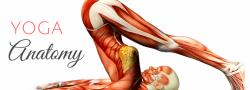 Yoga Anatomy Workshop - for RYTs