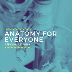 Anatomy for Everyone