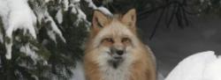 Wolf Preserve Tour