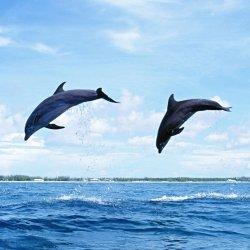 Dolphin Membership