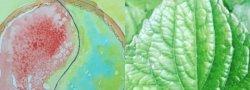 Plant Meditations and Watercolor Dreams Awaken/ Equinox
