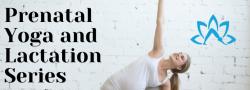 Prenatal Yoga and Lactation Series: Livestream