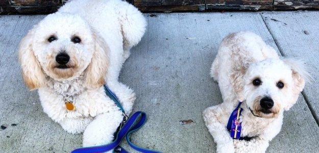 Dog Training Business in Kensington, MD