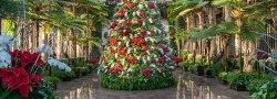 Longwood Gardens Christmas Tour