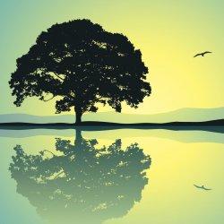 1 hour Private Yoga/Meditation  Session